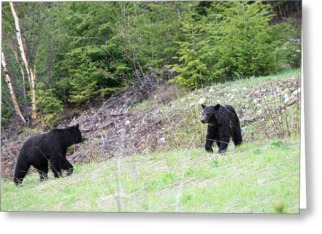 Black Bears In Motion Greeting Card by Andy Fung