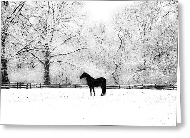Black Beauty Greeting Card by Bill Cannon