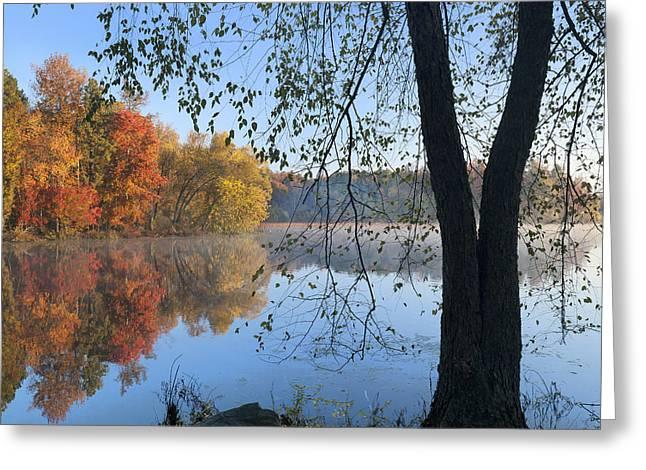 Black Birch Along Lake Bailee In Petit Greeting Card by Tim Fitzharris