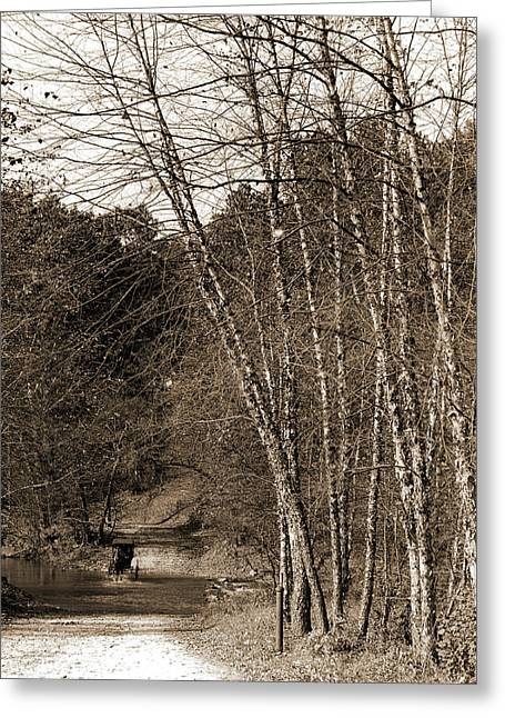 Black Birches, Zoo Park National Zoological Park Greeting Card