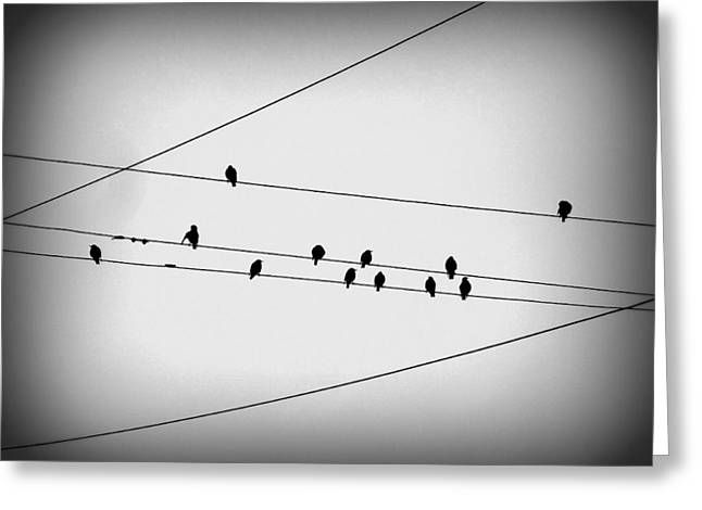 Black Birds Waiting Greeting Card