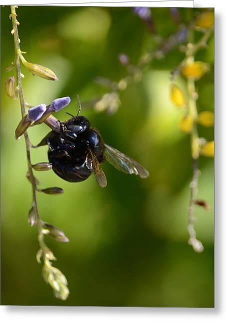 Black Bumblebee Greeting Card by Debra Martz