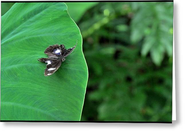 Black Butterfly Greeting Card by Achmad Bachtiar