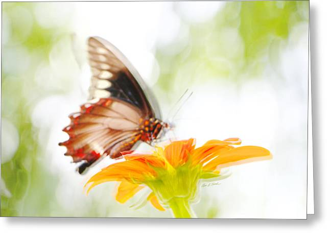 Black Butterfly In Motion I Greeting Card by Olivia Novak