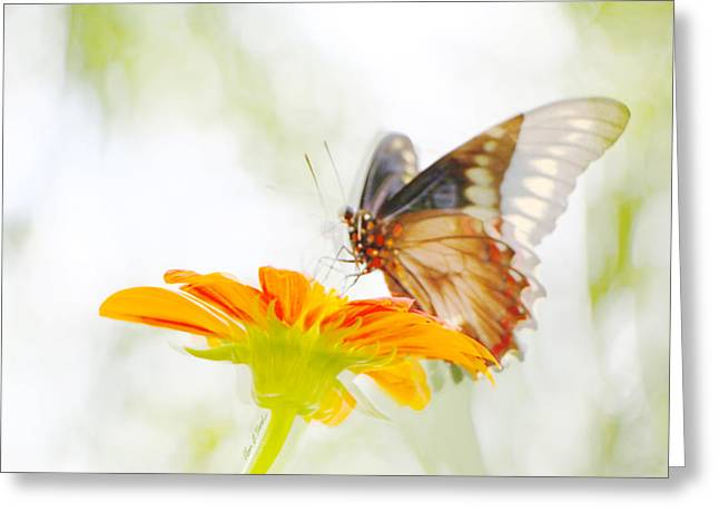 Black Butterfly In Motion II Greeting Card by Olivia Novak