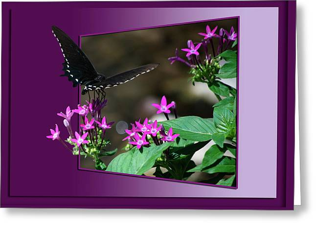 Black Butterfly Greeting Card by Thomas Woolworth