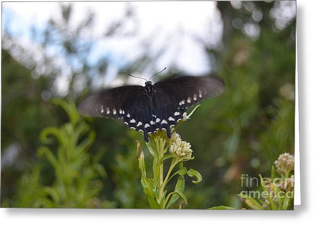 Black Butterfly Wing Macro Motion Blur At Bottom Of Grand Canyon Greeting Card by Shawn O'Brien