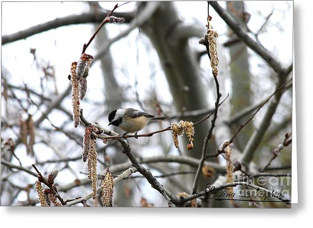 Greeting Card featuring the photograph Black-capped Chickadee 20120321_40a by Tina Hopkins