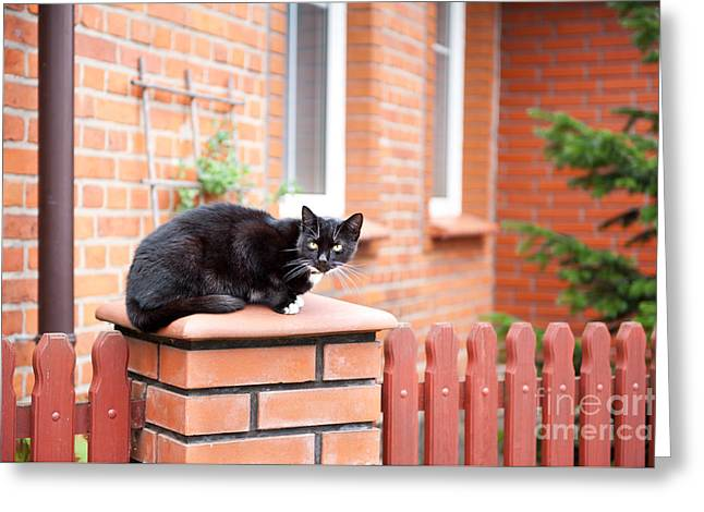 One Lonely Stray Black Cat Sitting On Fence  Greeting Card