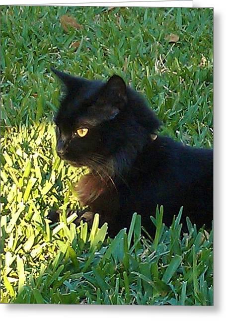 Black Cat Greeting Card by Deborah Lacoste
