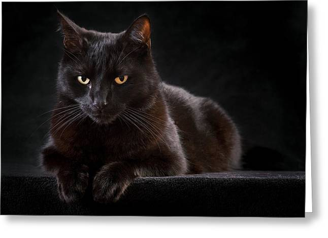Black Cat Greeting Card by Dirk Ercken