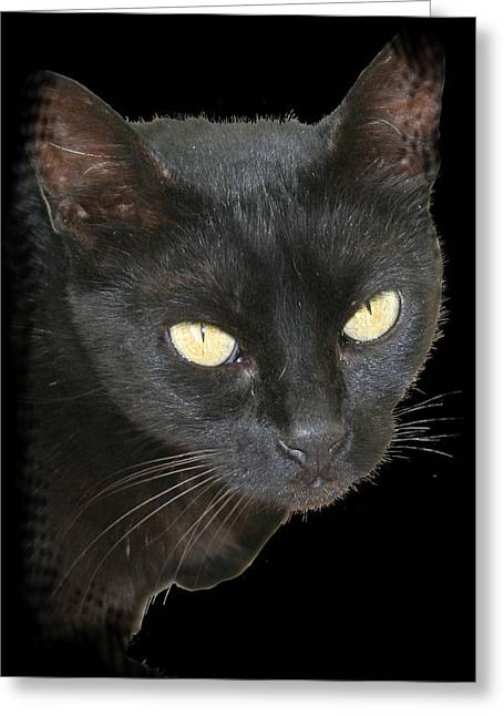Black Cat Isolated On Black Background Greeting Card by Tracey Harrington-Simpson