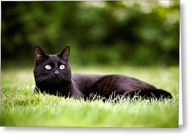 Black Cat Lying In Garden Greeting Card