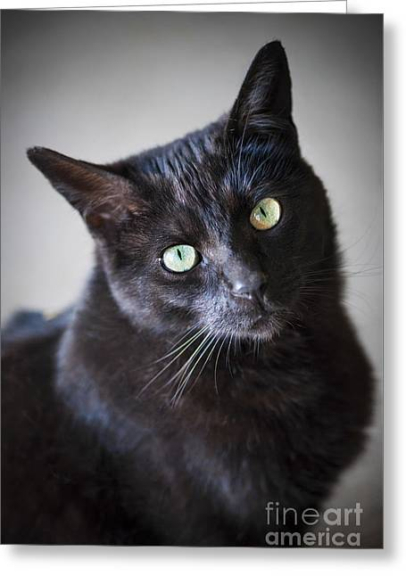 Black Cat Portrait Greeting Card by Elena Elisseeva