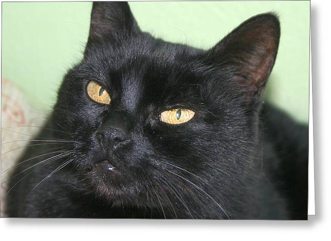 Black Cat Greeting Card by Tracey Harrington-Simpson