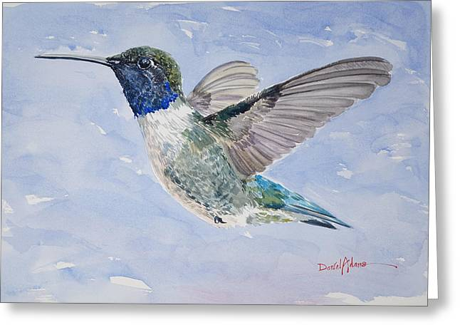 Da194 Black Chinned Hummingbird By Daniel Adams Greeting Card