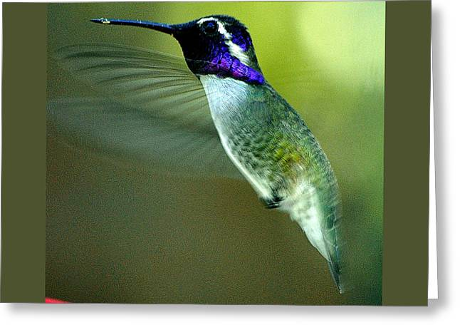 Greeting Card featuring the photograph Black Chinned Male In Flight To Feeder by Jay Milo