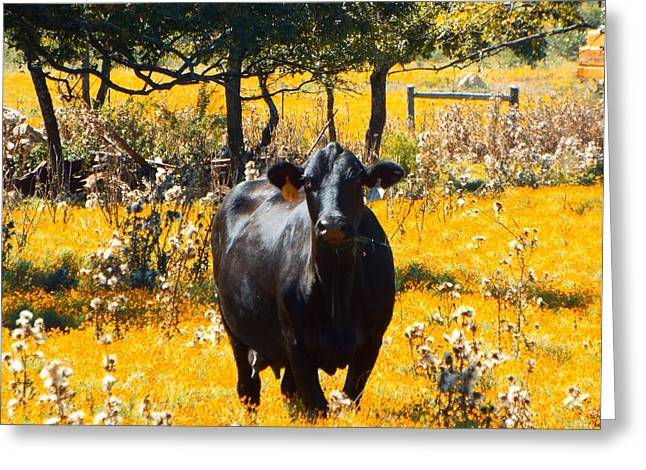 Black Cow And Field Flowers Greeting Card by Cindy Croal
