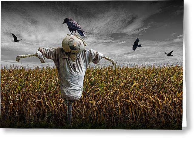 Black Crows Over A Cornfield With Scarecrow And Gray Sky Greeting Card