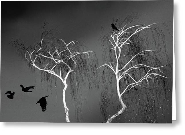 Black Crows - White Trees  Greeting Card