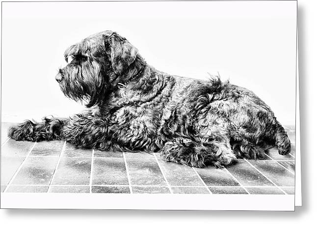 Black Dog Greeting Card by Andrei SKY