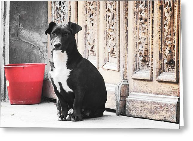 Black Dog Guarding A Vintage Wooden Door Greeting Card