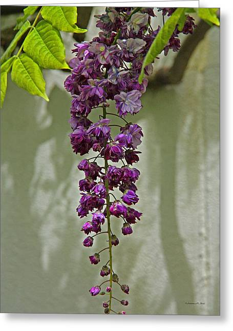 Black Dragon Wisteria Greeting Card by Suzanne Stout