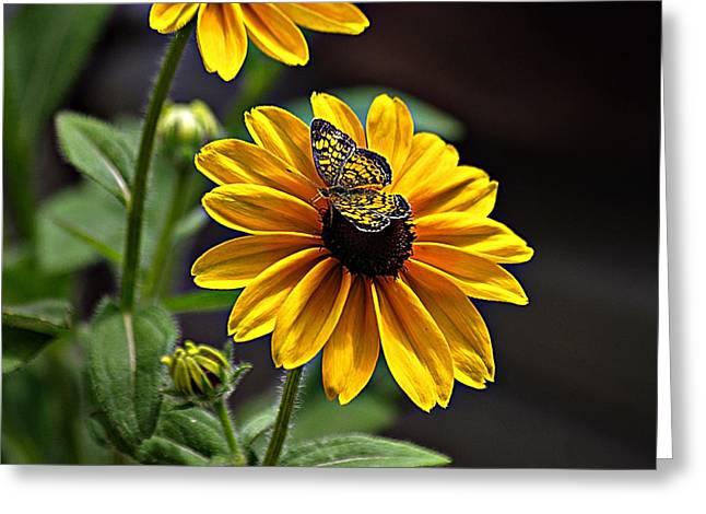 Black-eye Susan With Butterfly Greeting Card by Karen McKenzie McAdoo