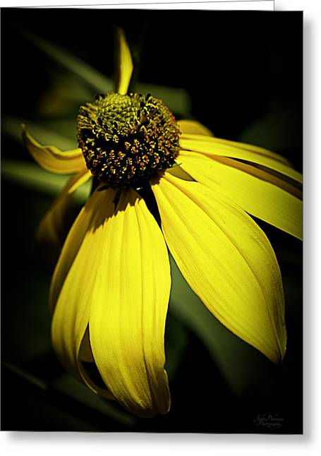 Black Eyed Susan 3 Greeting Card by Julie Palencia