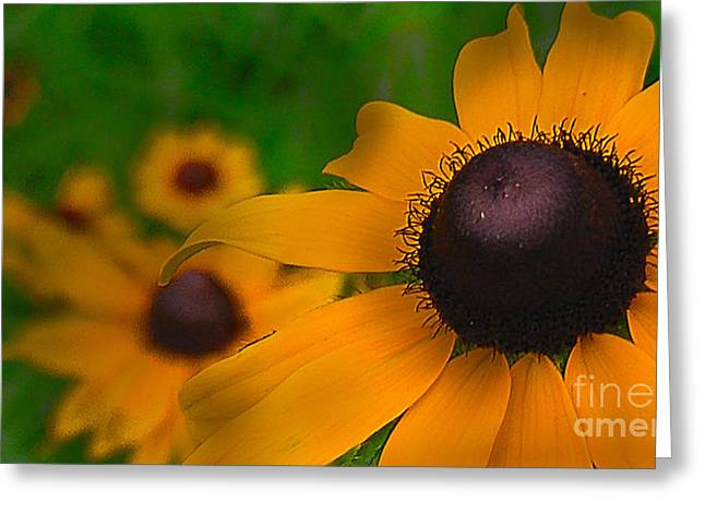 Black Eyed Susan Greeting Card by Brittany Perez