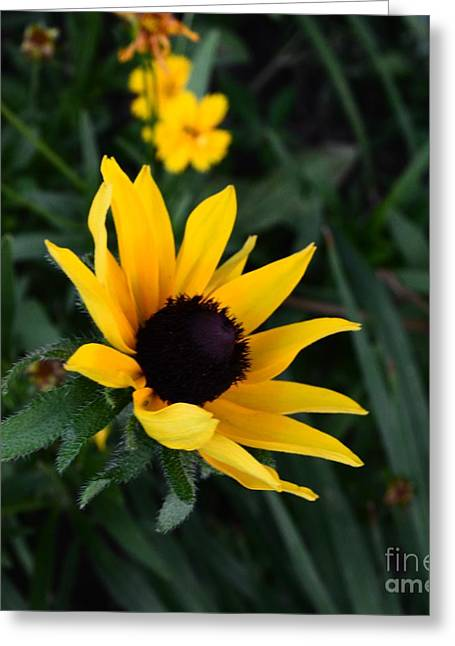 Greeting Card featuring the photograph Black-eyed Susan Glows With Cheer by Luther Fine Art