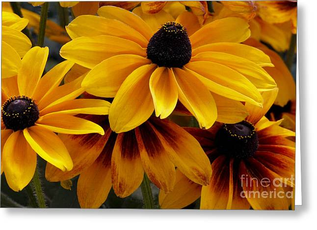 Greeting Card featuring the photograph Black-eyed Susan by Ivete Basso Photography