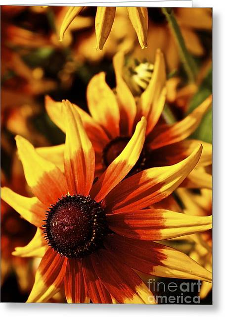 Greeting Card featuring the photograph Black Eyed Susan by Linda Bianic