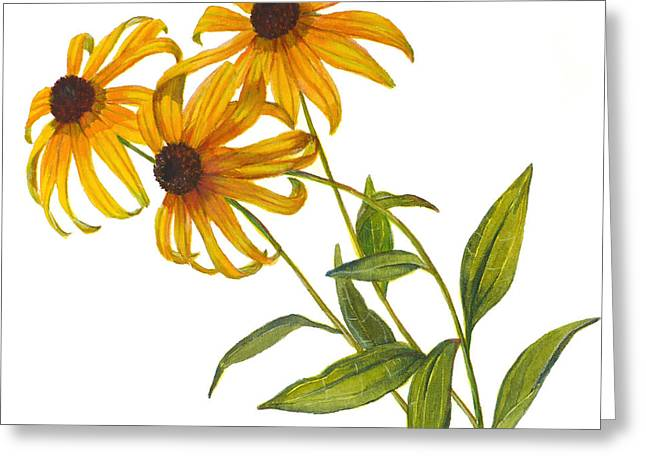 Black Eyed Susan - Rudbeckia Fulgida Greeting Card