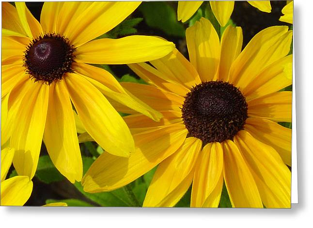 Black-eyed Susans Close Up Greeting Card by Suzanne Gaff