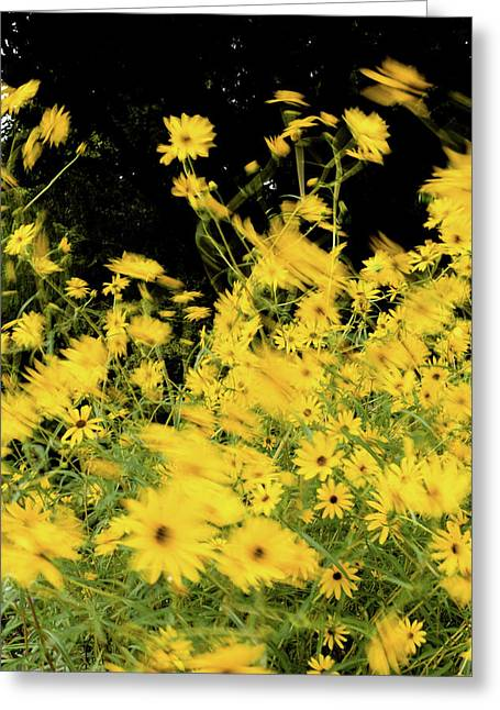 Black-eyed Susans In Bloom, Atlanta Greeting Card by Panoramic Images