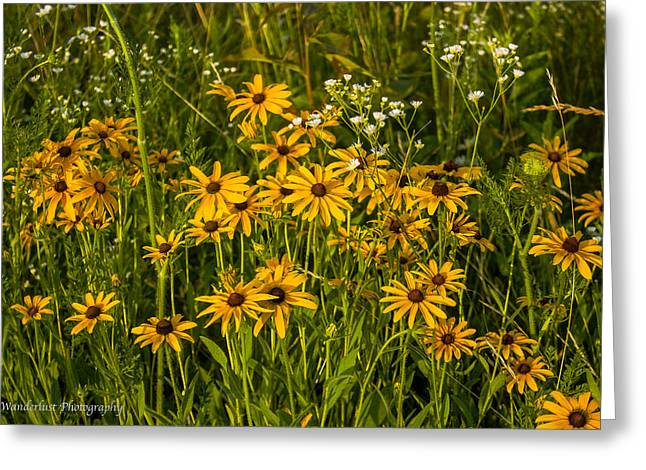 Black Eyed Susans Greeting Card by Paul Herrmann