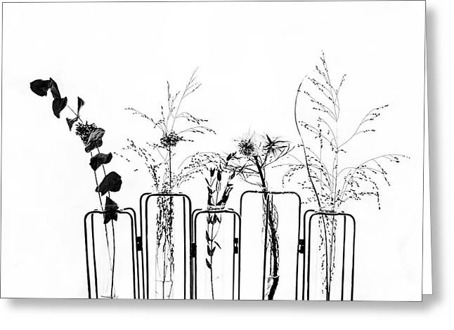 Black Flowers On White Background Greeting Card by #name?