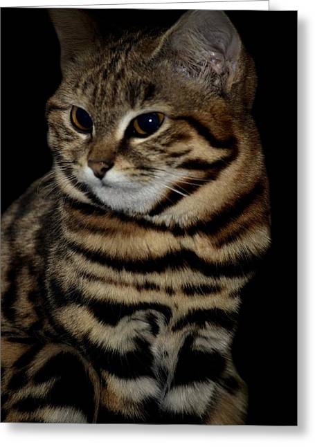 Black-footed Cat Greeting Card by Maria Urso