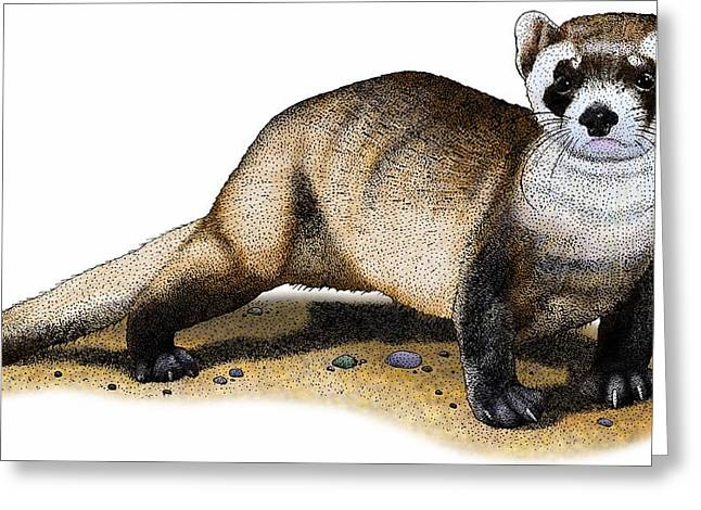 Black-footed Ferret Greeting Card