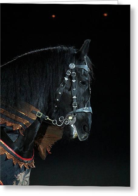 Black Friesian Greeting Card by Davandra Cribbie