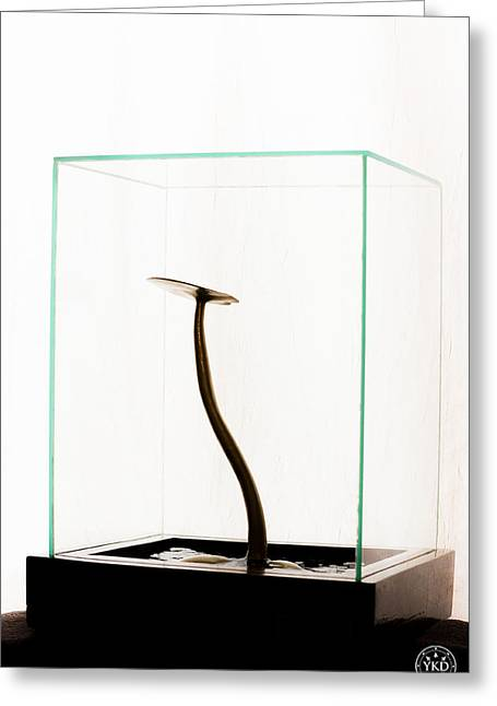 Black Gold Lily Greeting Card by Yevgeni Kacnelson
