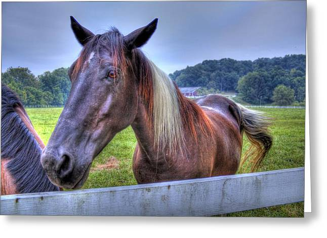 Black Horse At A Fence Greeting Card by Jonny D