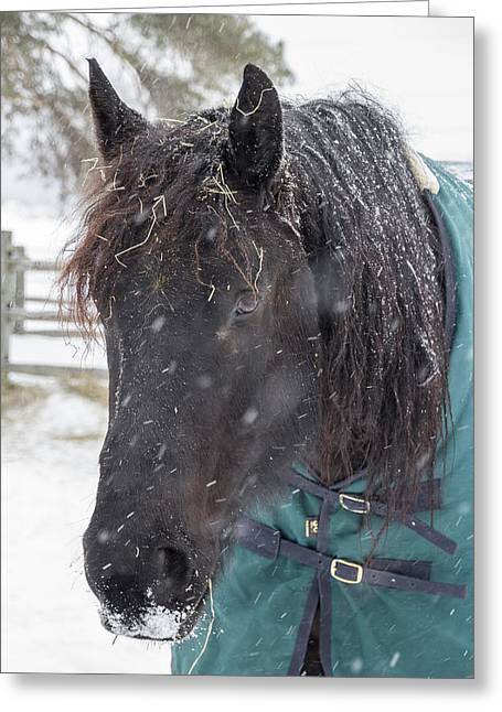 Black Horse In Snow Greeting Card