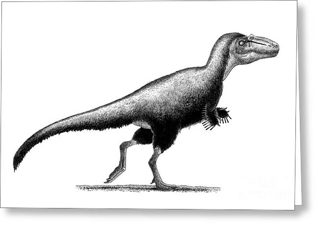 Black Ink Drawing Of Teratophoneus Greeting Card by Vladimir Nikolov