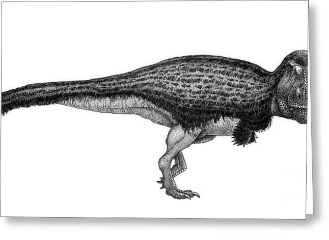 Black Ink Drawing Of Tyrannosaurus Rex Greeting Card by Vladimir Nikolov