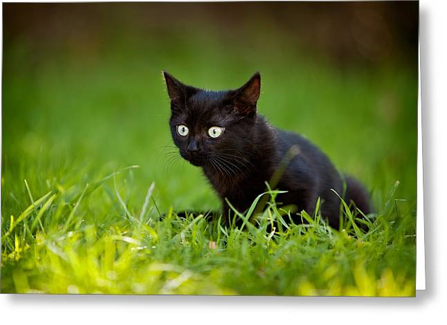 Black Kitten Greeting Card