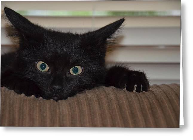 Black Kitten Greeting Card