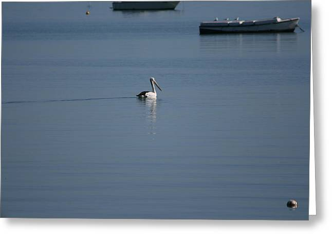 Black Line Pelican  Calm Water Greeting Card