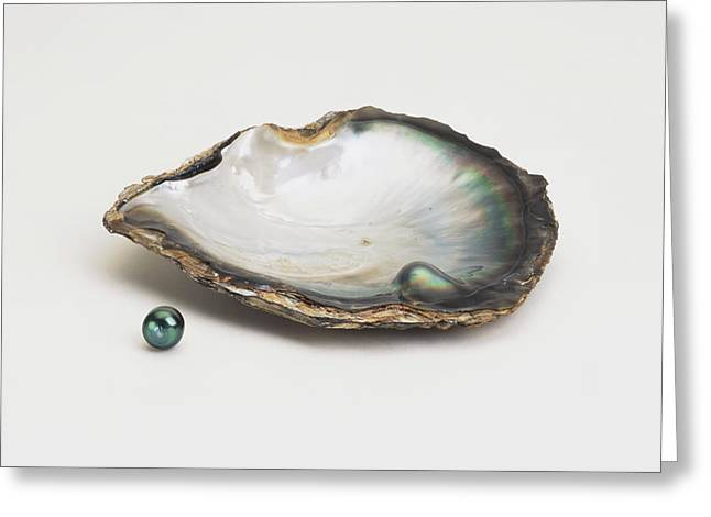 Black-lipped Pearl Oyster And Black Pearl Greeting Card